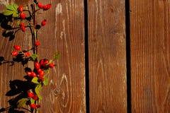 Różani biodra Na Drewnianym tle Zdjęcie Royalty Free