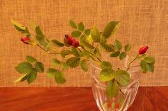Różani biodra przy studiiem Obrazy Royalty Free
