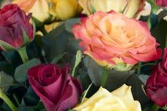 Różani kwiaty Zdjęcie Royalty Free