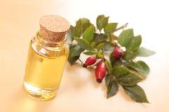 Różany biodro olej Obraz Stock