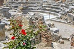 Różany krzak i ruiny antyczny miasteczko na tle Obrazy Royalty Free