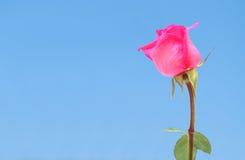 różany menchii niebo Zdjęcie Stock