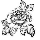 Różany motywu wzór Fotografia Royalty Free