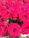 Różany rosse Obrazy Stock