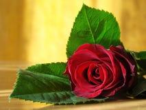 różany valentine Obrazy Stock