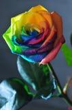Różany waterdrop Obrazy Royalty Free