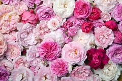 Róże.