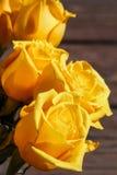 róże Obraz Royalty Free