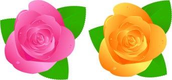 róże dwa waterdrops Obraz Royalty Free