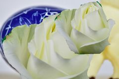 Róże i Easter jajko Obraz Royalty Free