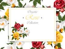 Róże i motyle Fotografia Stock