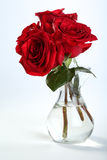 Róże III Obraz Stock