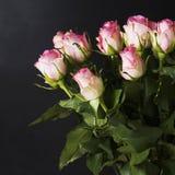 Róże na czarnym tle Zdjęcia Stock