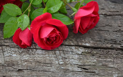 Róże na drewnianym tle Obraz Stock
