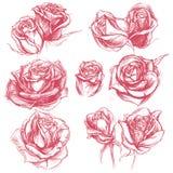 Róże Rysuje set 001 Zdjęcie Stock