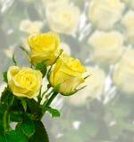 róże trzy Zdjęcie Stock