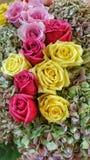 Róże z hortensjami Zdjęcia Stock