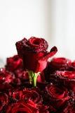 Róże z kroplami Zdjęcie Royalty Free