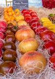 RÓŻNA rozmaitość ŚWIEZI pomidory Zdjęcia Stock