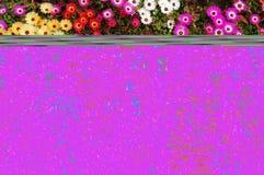 różne kolor kwiatów Fotografia Stock