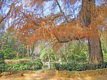 Różni drzewa i krzaki Obraz Stock