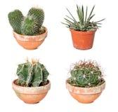 Różni kaktusy i agawa w flowerpots Obrazy Stock