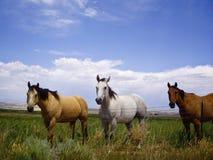 różni kolorów konie Zdjęcia Royalty Free
