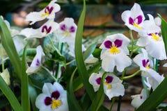 Różni kwiatów garnki w zielonym domu Fotografia Stock