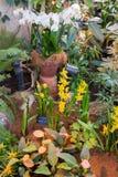 Różni kwiatów garnki w zielonym domu Zdjęcie Stock