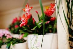 Różni kwiaty na garnkach przy kwiatu sklepem Zdjęcia Royalty Free