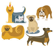 różni psy Obraz Stock