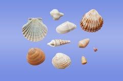 Różni typ seashells Zdjęcie Royalty Free