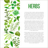 Różni ziele z opisu tekstem Zdjęcia Stock