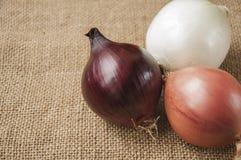 Różnorodne cebule na desce grabije na tle, burlap Fotografia Royalty Free