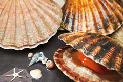 Różnorodni seashells na mokrych kamieniach Zdjęcia Royalty Free