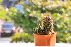 Różnorodny kaktus Obraz Stock