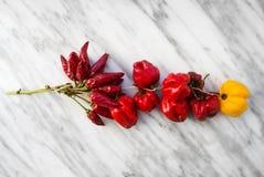 Różnorodny typ wysuszeni chili pieprze Obraz Royalty Free
