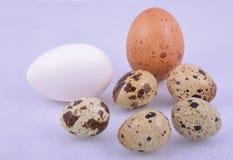 Różny colour jajko Fotografia Royalty Free