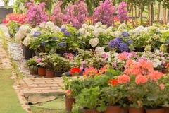 Różny jakby Kwitnie i ziele w garnkach w szklarni Obraz Stock