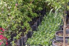 Różny jakby Kwitnie i ziele w garnkach w szklarni Zdjęcie Royalty Free