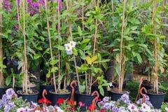 Różny jakby Kwitnie i ziele w garnkach w szklarni Zdjęcia Royalty Free