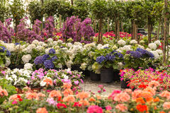 Różny jakby Kwitnie i ziele w garnkach w szklarni Obrazy Stock