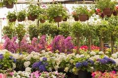 Różny jakby Kwitnie i ziele w garnkach w szklarni Fotografia Royalty Free