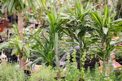 Różny jakby Kwitnie i ziele w garnkach w szklarni Obraz Royalty Free