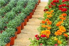 Różny jakby Kwitnie i ziele w garnkach w szklarni Fotografia Stock