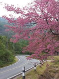 różowa droga Obraz Stock