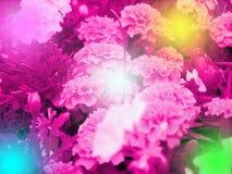 różowa dumy rainbow Obrazy Royalty Free