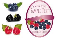 Różowa etykietka z czarnymi jagodami i malinkami z Obraz Stock