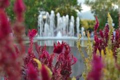 Różowa natura Zdjęcia Stock