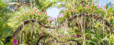 Różowa orchidea Zdjęcia Stock